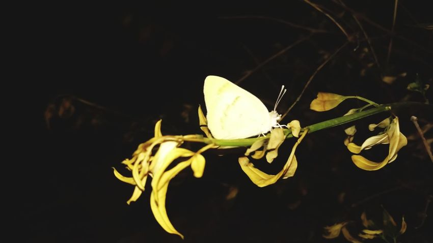 Nature Insect One Animal Outdoors Night No People Betterfly Garden