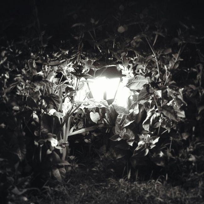 Hello World Popular Photos Professional Nature Flowers Blackandwhite Light Garden Gardenlight Relaxing