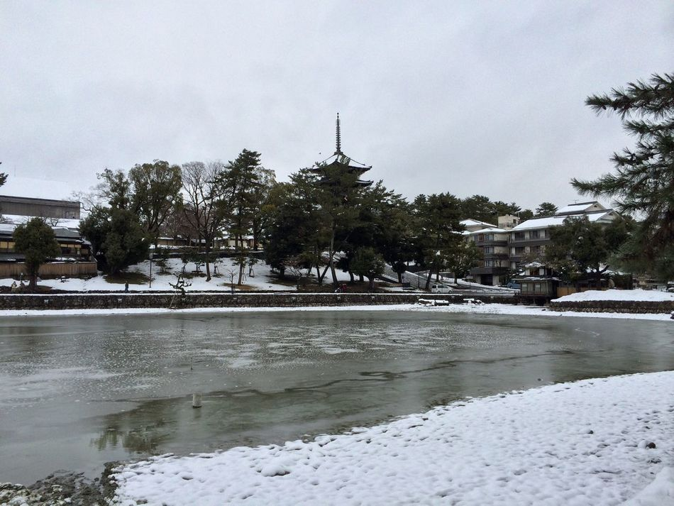奈良 猿沢池 Snow