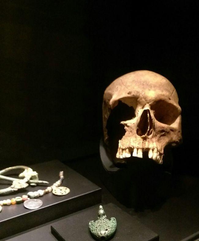 Spooky Human Skeleton Human Skull Horror Archival Human Body Part Human Bone Indoors  Skull Viking Museum Cincinnati Union Terminal Ohio, USA Artifacts