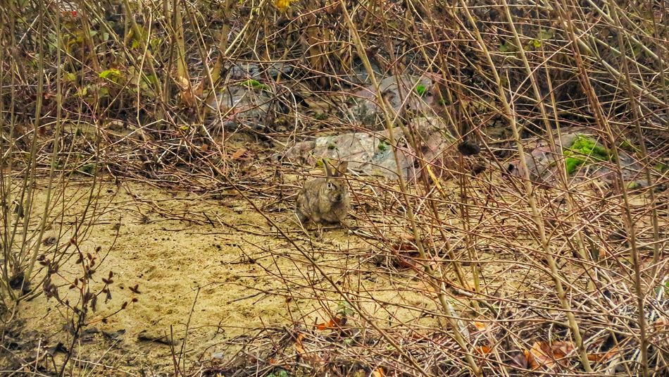Backgrounds Nature Sunlight No People Day Beauty In Nature Outdoors Close-up Beach Tree Photo Photography Canon Beautifulview Canonphotography Canonpowershot Beautiful Beautiful Colors Rabbit 🐇 Rabbits Rabbit - Animal Animals In The Wild Lapin Animal Themes