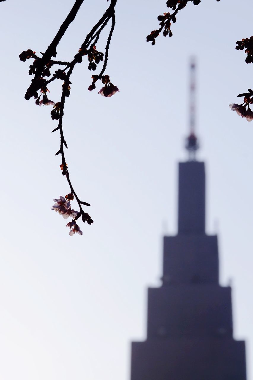 Cherry Blossoms On Branch With Tower In Background Against Clear Sky