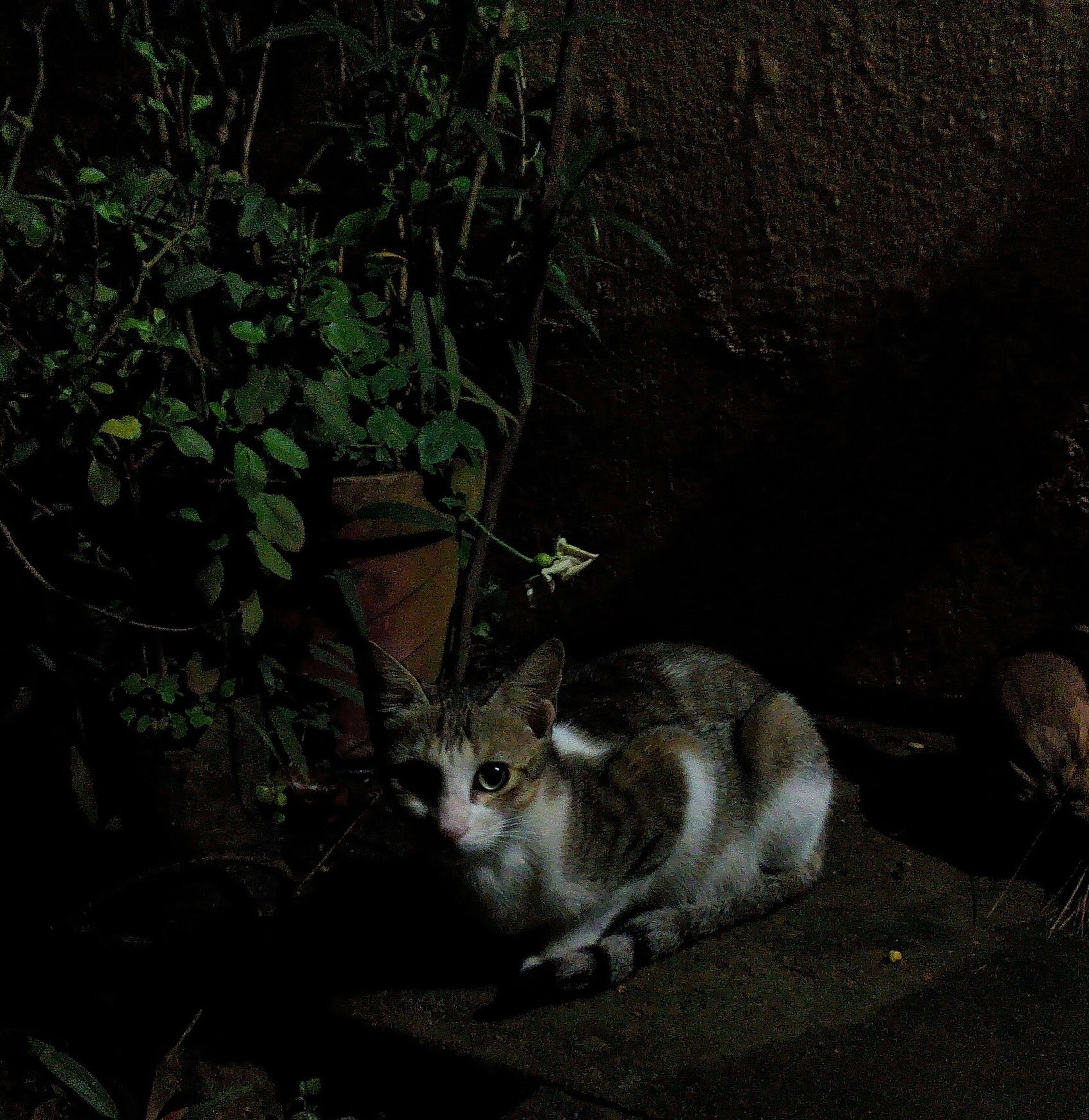 one animal, dark, pets, animal themes, mammal, night, no people, nature, domestic animals, outdoors