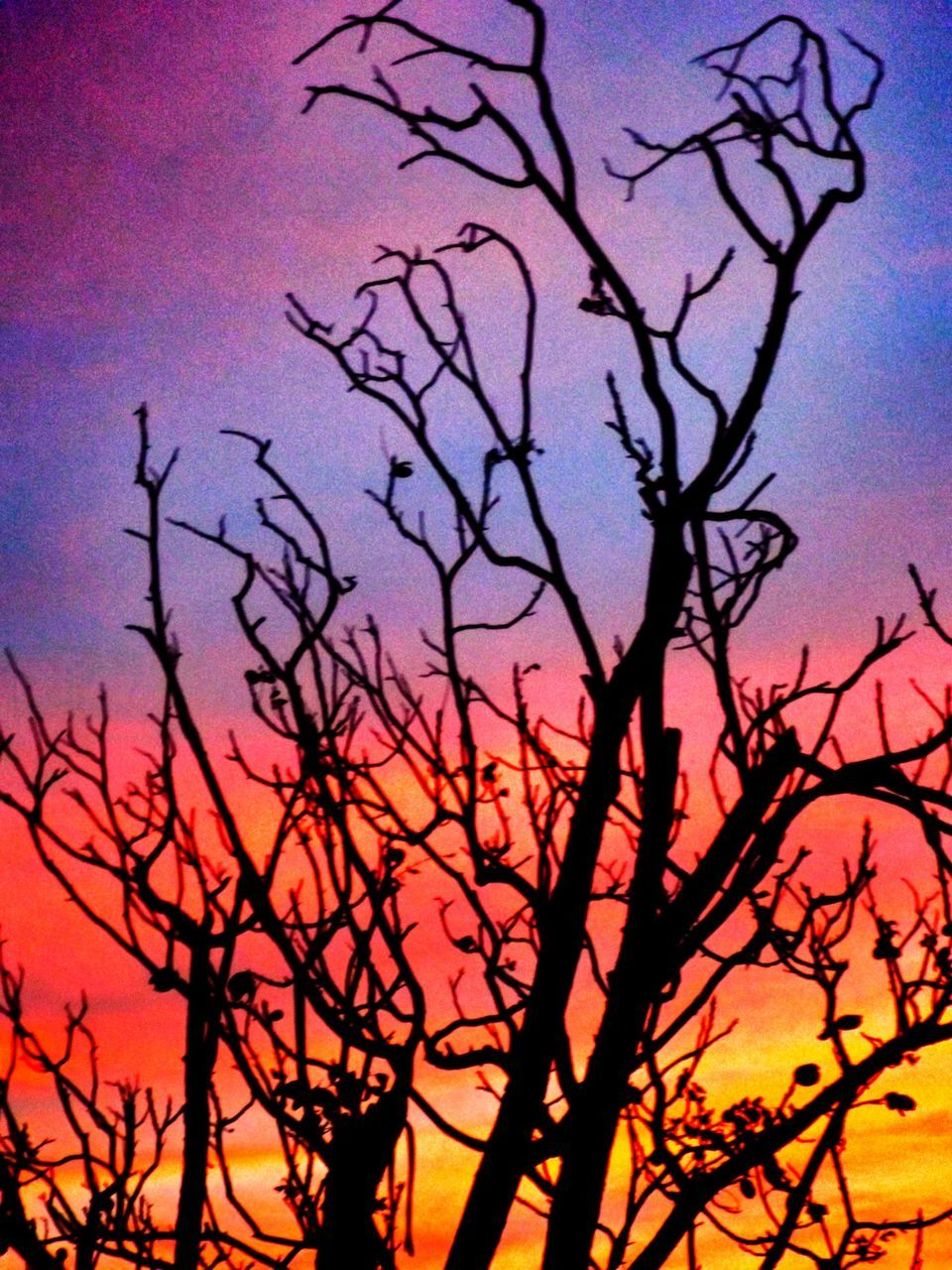bare tree, silhouette, sunset, nature, beauty in nature, tree, sky, branch, no people, tranquility, outdoors, scenics, day