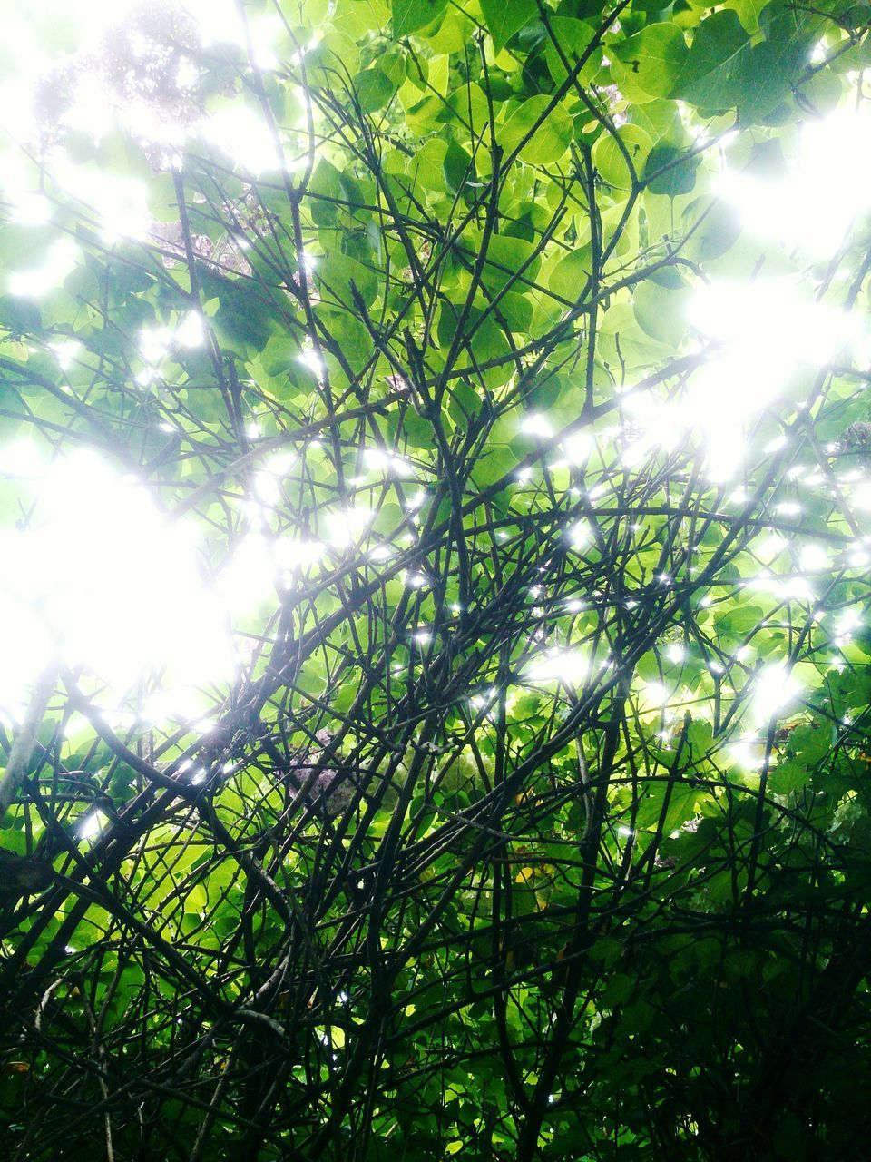 nature, low angle view, growth, tree, beauty in nature, green color, day, no people, outdoors, tranquility, sunlight, branch, plant, forest, scenics, sky