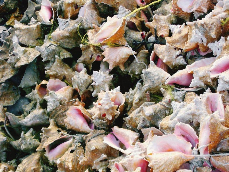 Beautiful stock photos of bahamas, Abundance, Animal Themes, Backgrounds, Choice
