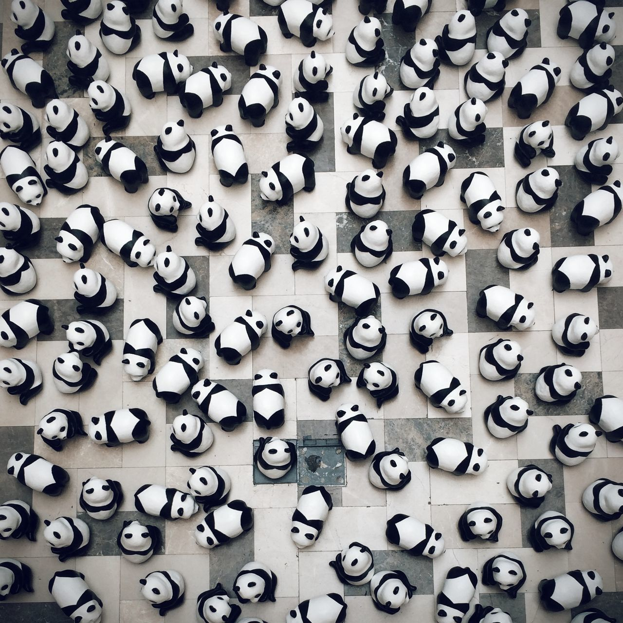 ? panda's home Vscocam IPhoneography EyeEm Best Shots Eye4photography  Photography Instagram Wwfmalaysia 1600pandas