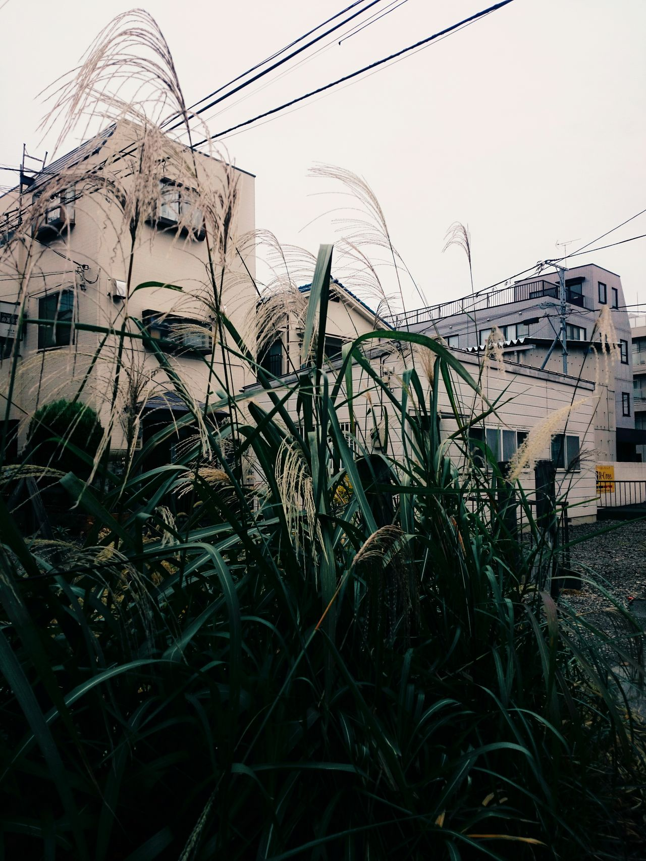 it's beginning to feel like winter. Tokyo Days Japan Scenery Morning Walk Cold Temperature Andrography