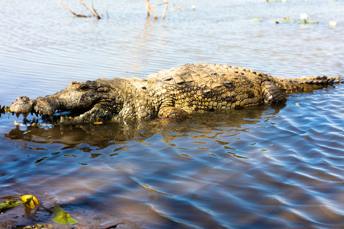 Animal Themes Animals In The Wild Beauty In Nature Day Dead Plant Log Nature No People One Animal Outdoors Reflection Reptile Selective Focus Stone Textured  Tranquil Scene Tranquility Tropical Climate Vacations Water Wildlife