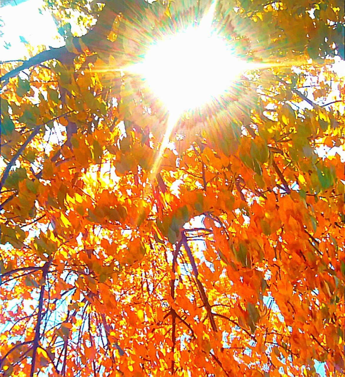 autumn, leaf, change, nature, sunlight, low angle view, tree, maple tree, sunbeam, orange color, lens flare, beauty in nature, sun, outdoors, day, maple leaf, no people, branch, growth, scenics, brightly lit, sky, close-up
