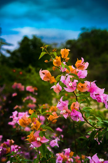 Green Pink Red Trees Beauty In Nature Blooming Blue Close-up Day Flower Flower Head Flowers Fragility Freshness Growth Inspiration Landscape Nature No People Outdoors Petal Pink Color Plant Sky Yellow
