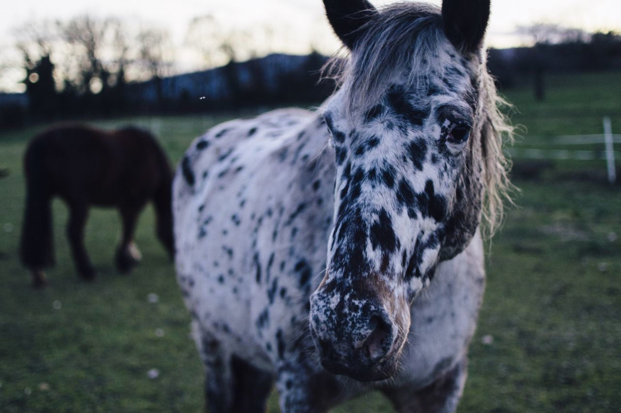 Beautiful stock photos of animals, Animal Themes, Close-Up, Day, Field