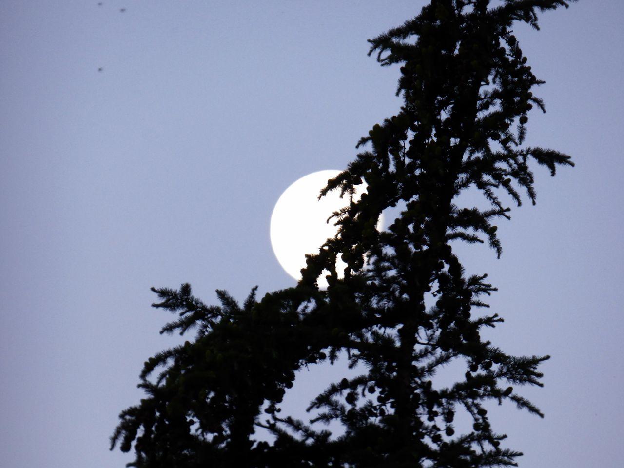 Moon Moon Light Moon Shots Moonlight Simple Color Combo Simple Colors Sky Tree