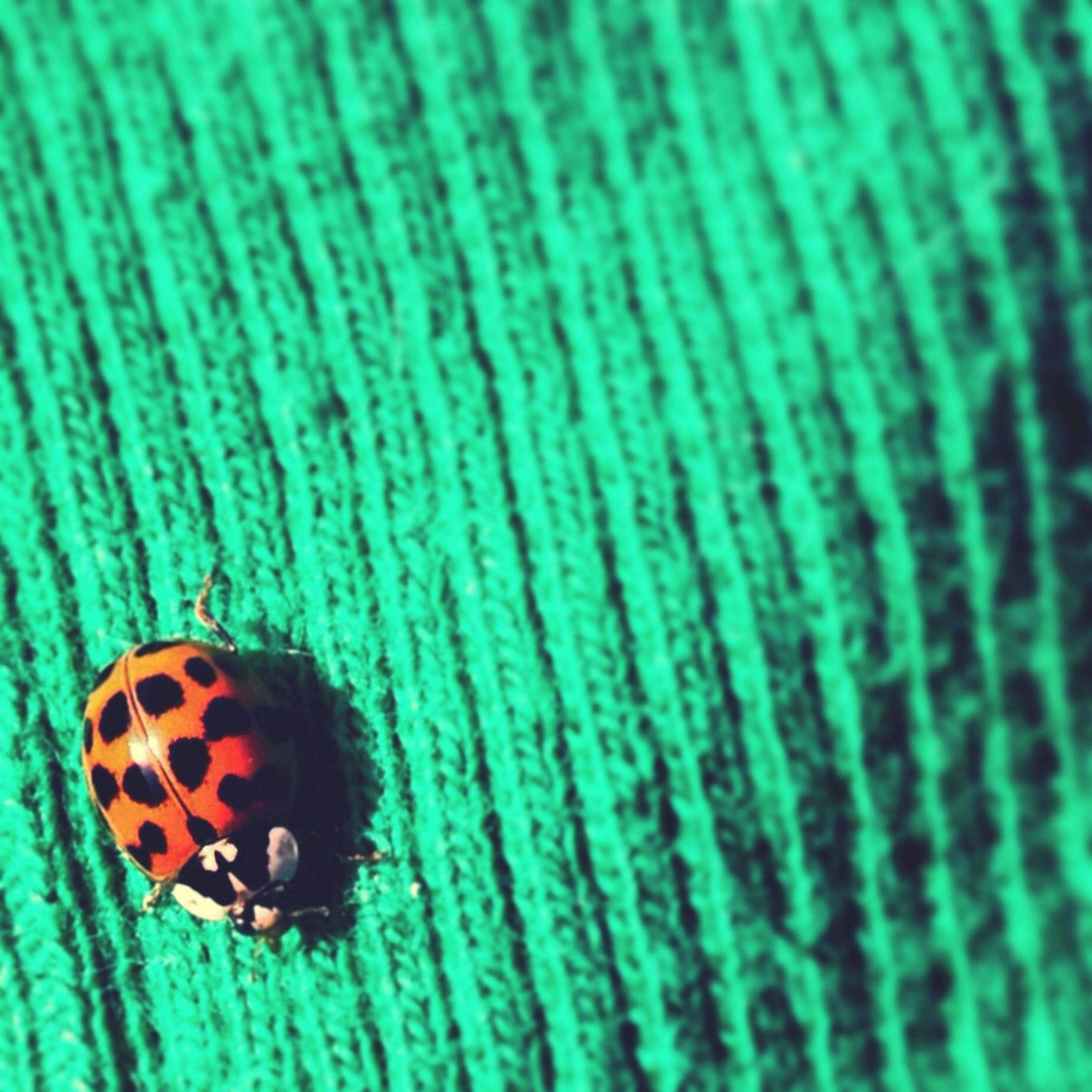 close-up, pattern, insect, textured, animal themes, natural pattern, full frame, indoors, one animal, backgrounds, selective focus, design, still life, single object, no people, fabric, spotted, high angle view, brown, blue
