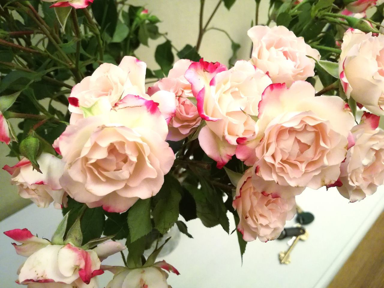Flower Fragility Nature Beauty In Nature Freshness Plant Petal Growth Flower Head Leaf Close-up No People Pale Pink Day Flowers,Plants & Garden White Color White Flower Roses Flowers, Nature And Beauty Roses Flowers  Rose🌹 Rose - Flower