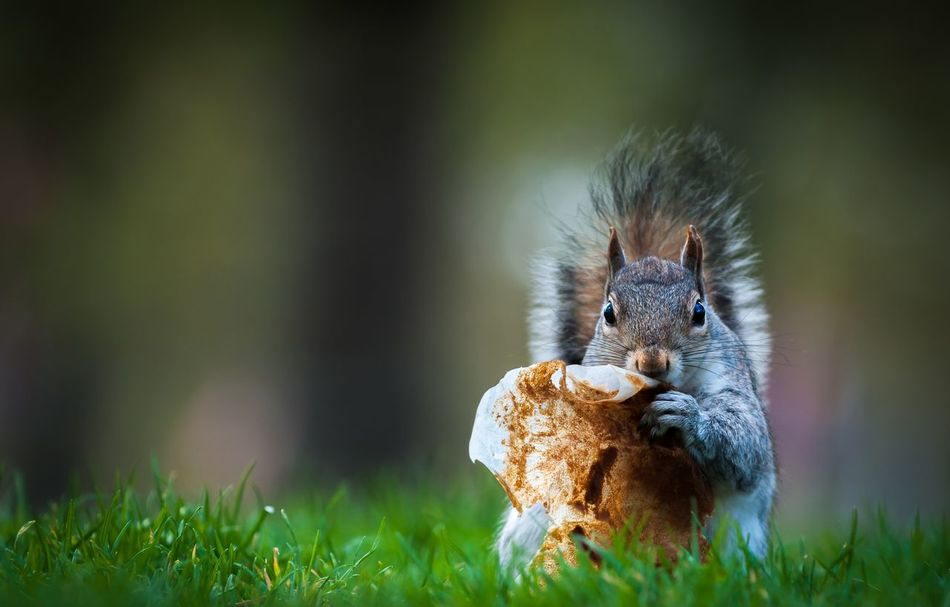 Beautiful stock photos of cute, Animal Themes, Animals In The Wild, Day, Field