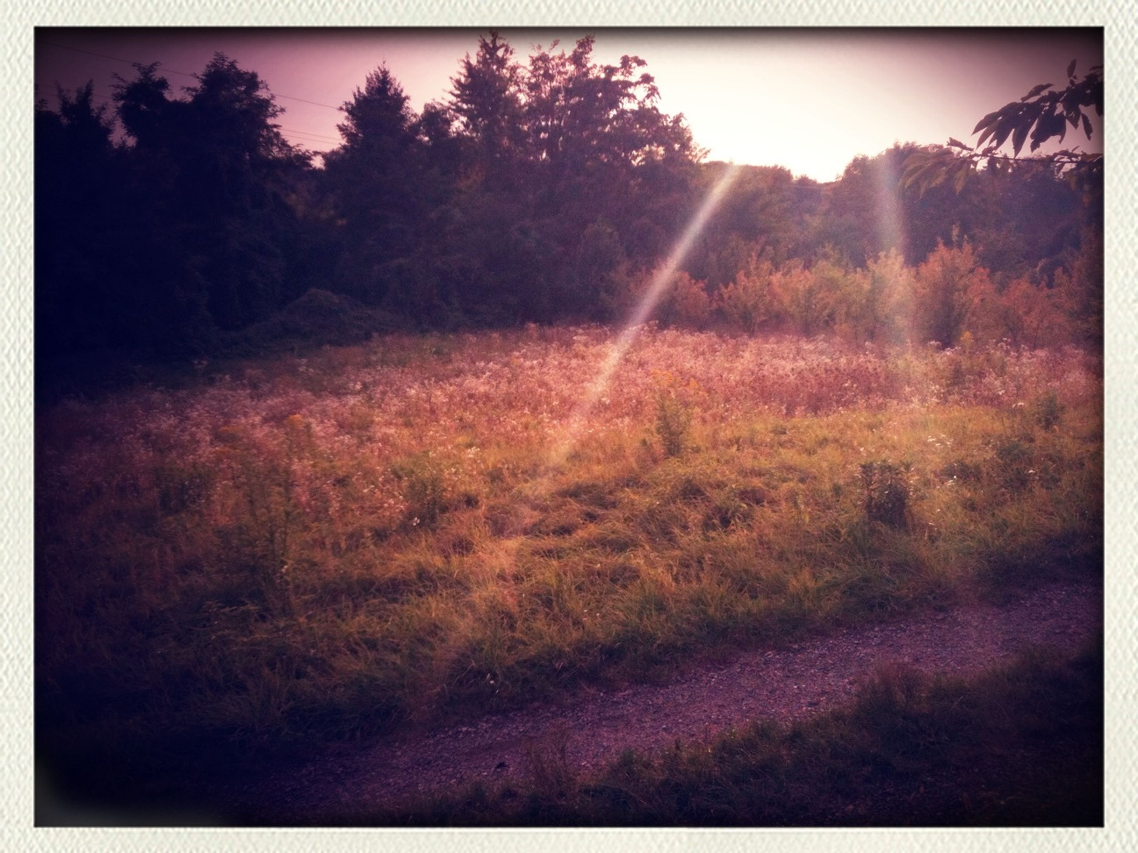 transfer print, auto post production filter, tree, grass, landscape, field, tranquility, tranquil scene, nature, sunlight, growth, scenics, beauty in nature, sun, grassy, sky, sunbeam, lens flare, outdoors, plant