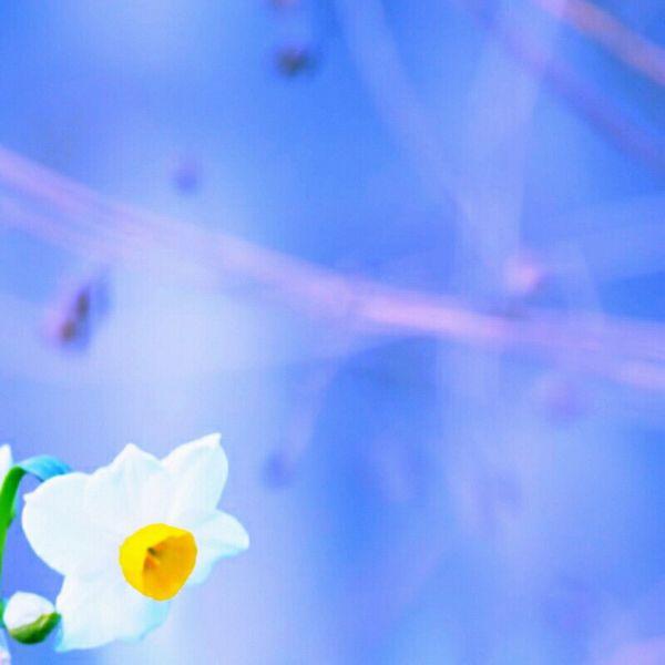 Flowers Nature Beautiful Capturedmoment Floweroftheday Wonderfulworld Keicomoment