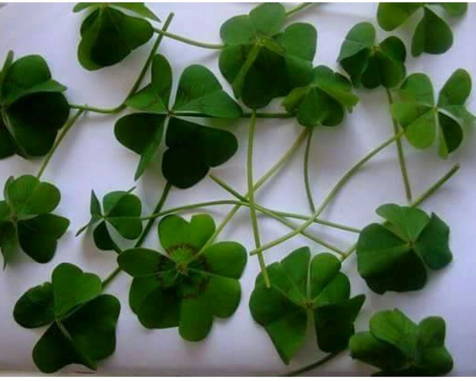 Lucky All...day Good Luck For You💞💞💞
