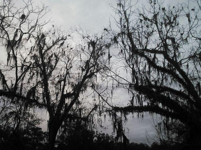 Natural Beauty Nature Photography Grey Sky