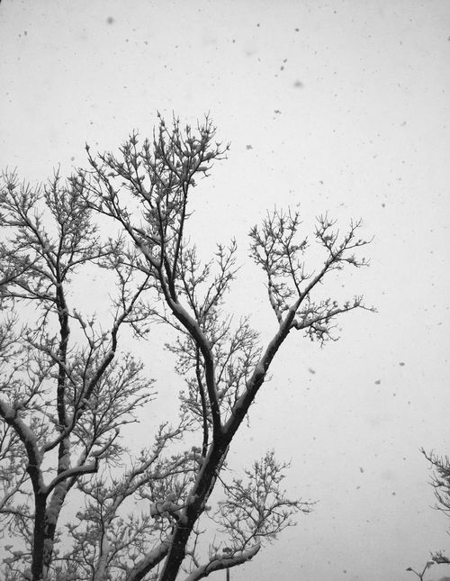 Winter is here. Snow Fall Flakes Simplicity Leafless Winter Blizzard Colorado Fort Collins CSU