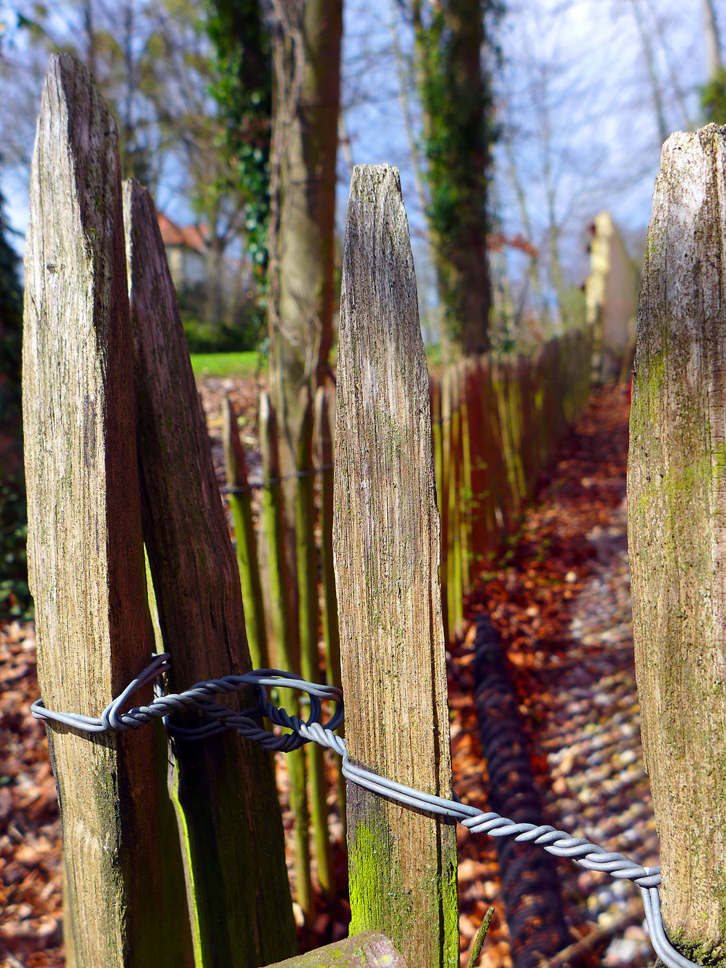 Wooden fence Fence Fencepost Fencing Post Lattenzaun Nature Tranquil Scene Tranquility Tree Trunk Wood - Material Wooden Fence Wooden Post Zaun