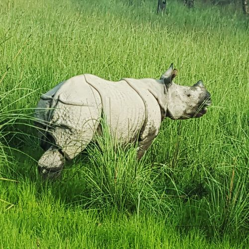 Jungle Nature Green Wildlife Photography Photography Check This Out Rhino Animals In The Wild Aniamls Dudhwa Forest Forest Photography Green Grass Wildlife Wild Wildlife & Nature