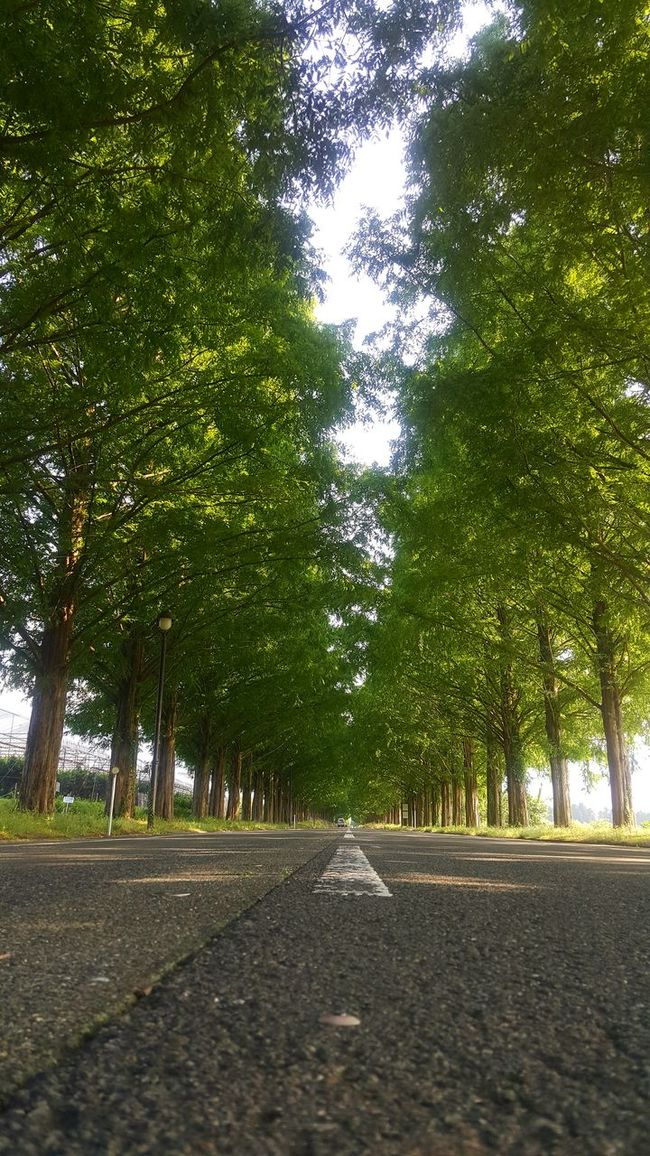 メタセコイヤ並木♪ Enjoying Life Nature_collection Nature Holiday Green Tree Tree_collection  Relaxing