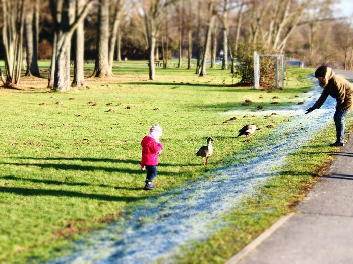 Lakeside Geese Nature Autumn Winter Childhood Memories Geese At The Lake Child In Nature Animal Feeding Meadows Floodplain