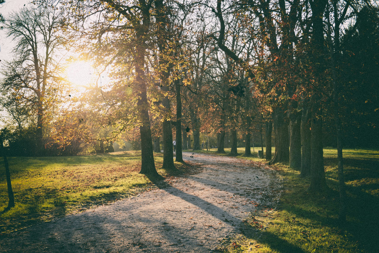 Analogous Colors Analogue Photography Autumn Autumn Colors Autumn Leaves Beauty In Nature Brown Color Palette Colorful Colors Garden Green Leafs Photography Lightroom Nik Collection Nostalgia Nostalgic  Nostalgic Landscape Retro Retro Filters Retro Styled Solstice Sunset Tivoli VSCO The Great Outdoors - 2017 EyeEm Awards
