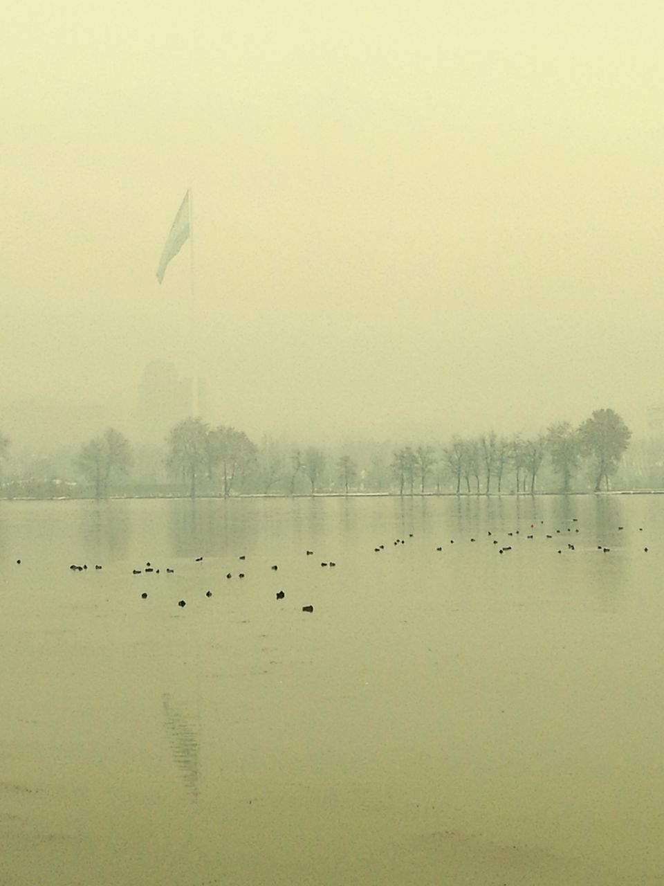 water, lake, nature, fog, duck, bird, reflection, animal themes, foggy, beauty in nature, outdoors, tranquility, animals in the wild, tranquil scene, floating on water, large group of animals, waterfront, no people, flock of birds, day, scenics, goose, cold temperature, sky, flying, swimming, tree, swan