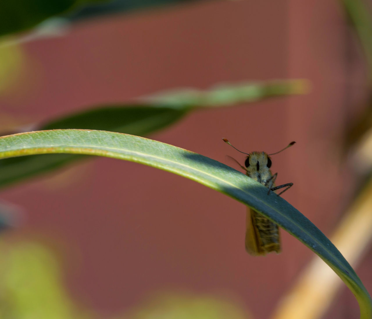 one animal, animals in the wild, insect, animal themes, close-up, animal wildlife, green color, selective focus, leaf, day, no people, outdoors, nature