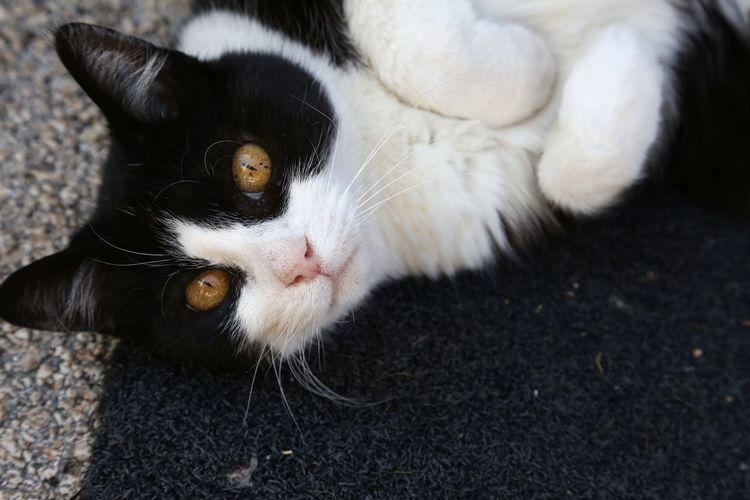 Nautical Equipment EyeEm Selects Domestic Cat Pets One Animal Cute No People