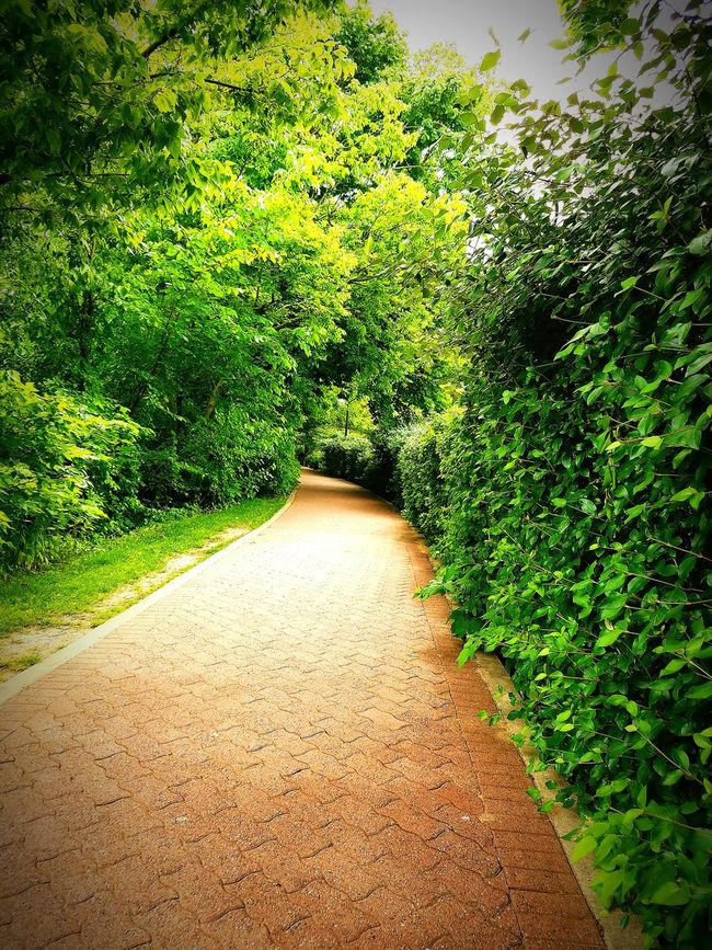 Nature Walking Enjoying The Sights Check This Out Taking Photos Walking Around Taking Pictures Walking Trees Path In Nature Path