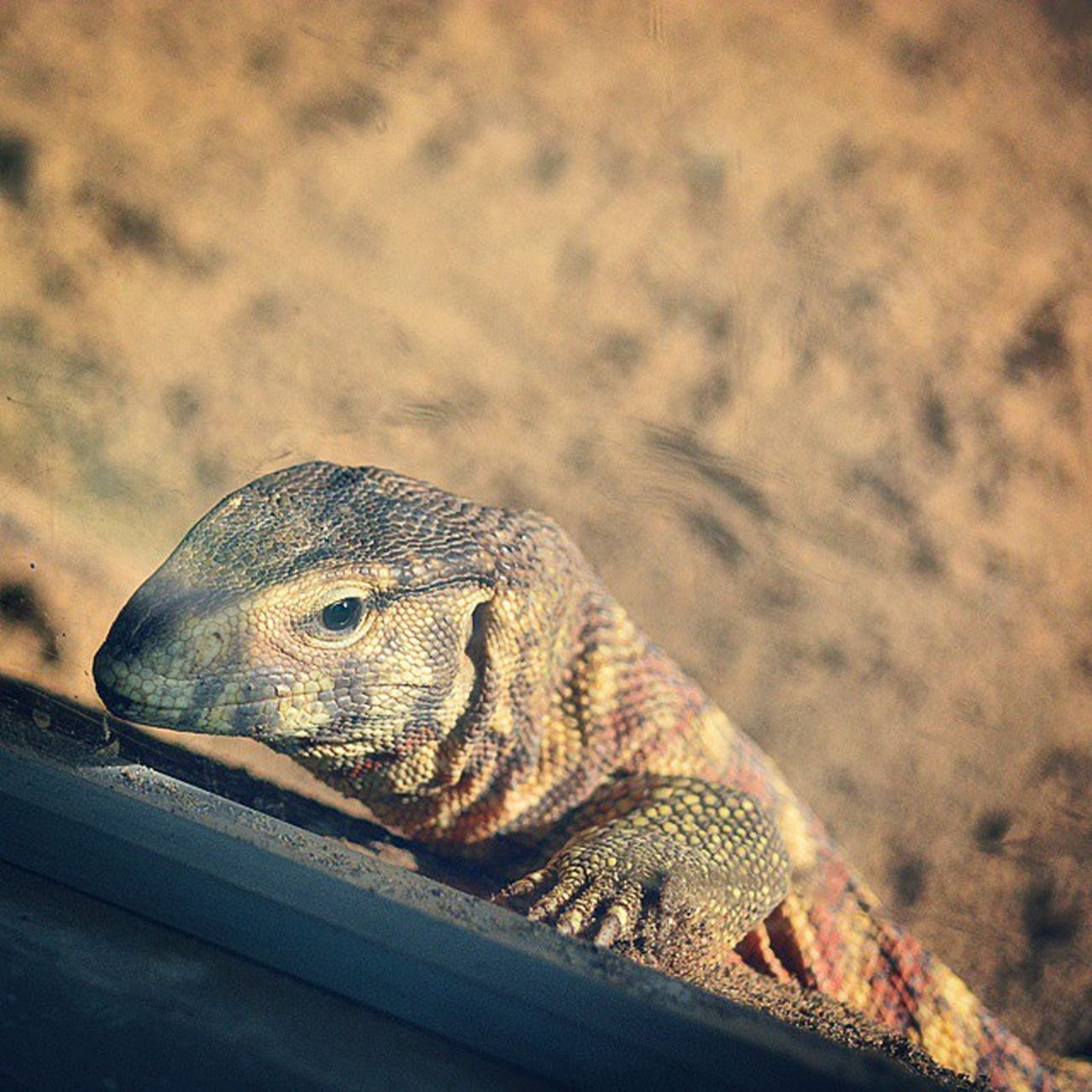 Gagans_photography Reptiles Instachandigarh Fear Factor Gagans_photography
