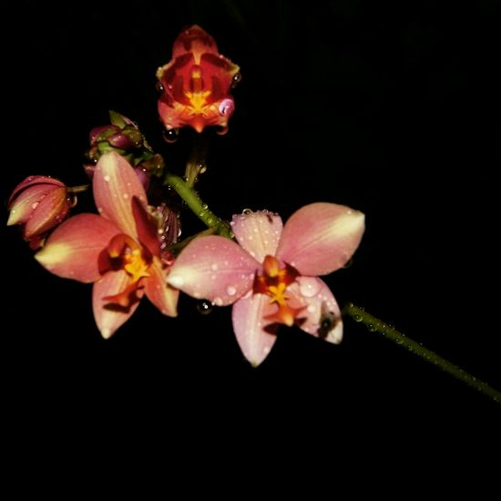 My favorite Flowershots so far.. Canon Camera OrchidLover