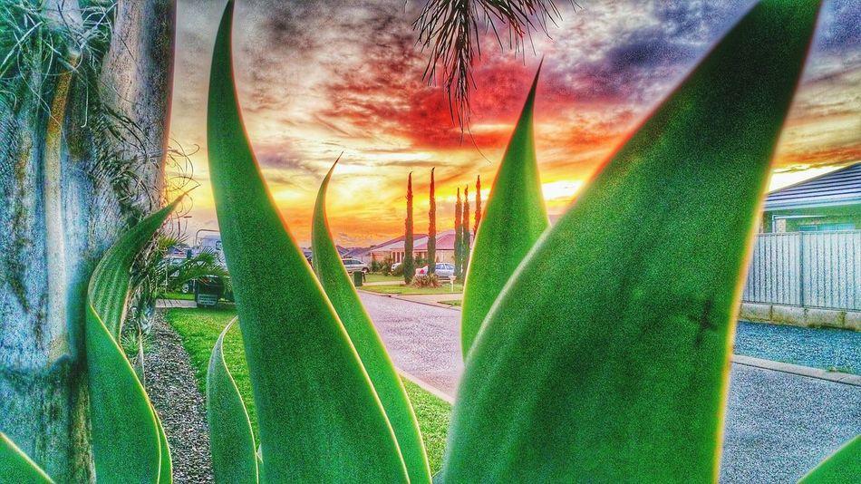 burbs sunset Hugging A Tree First Eyeem Photo
