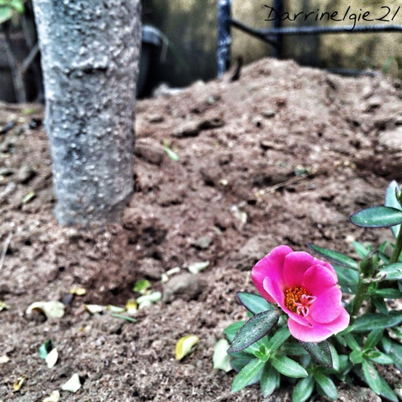 Pretty. Di21 Flower