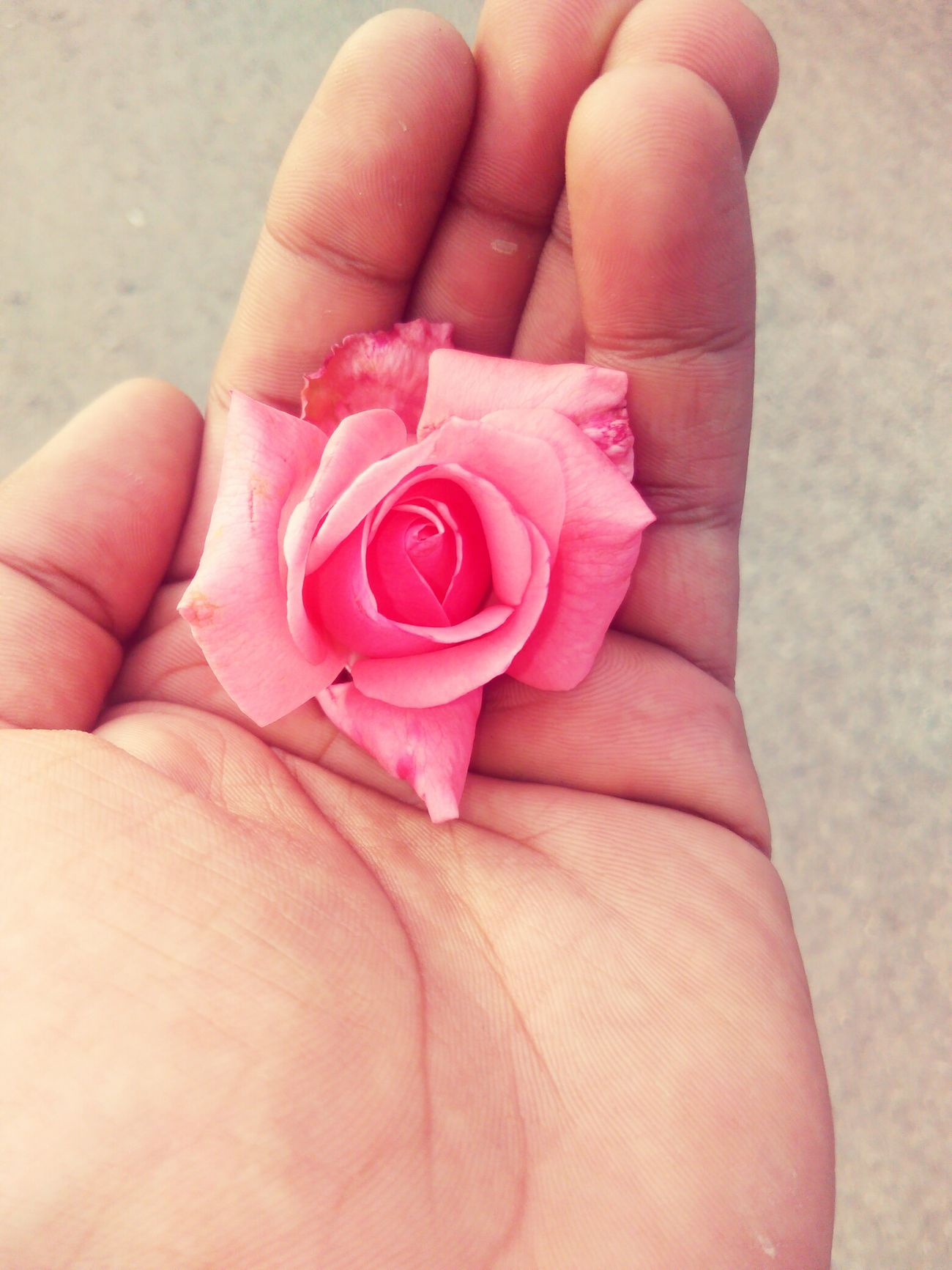 I found it 😊😍 Rose🌹 Pink Rose Rose In My Hand🌹 Hand My Hand  Street Photography Street Photo Streetphoto_color In Cairo Cairo Egypt