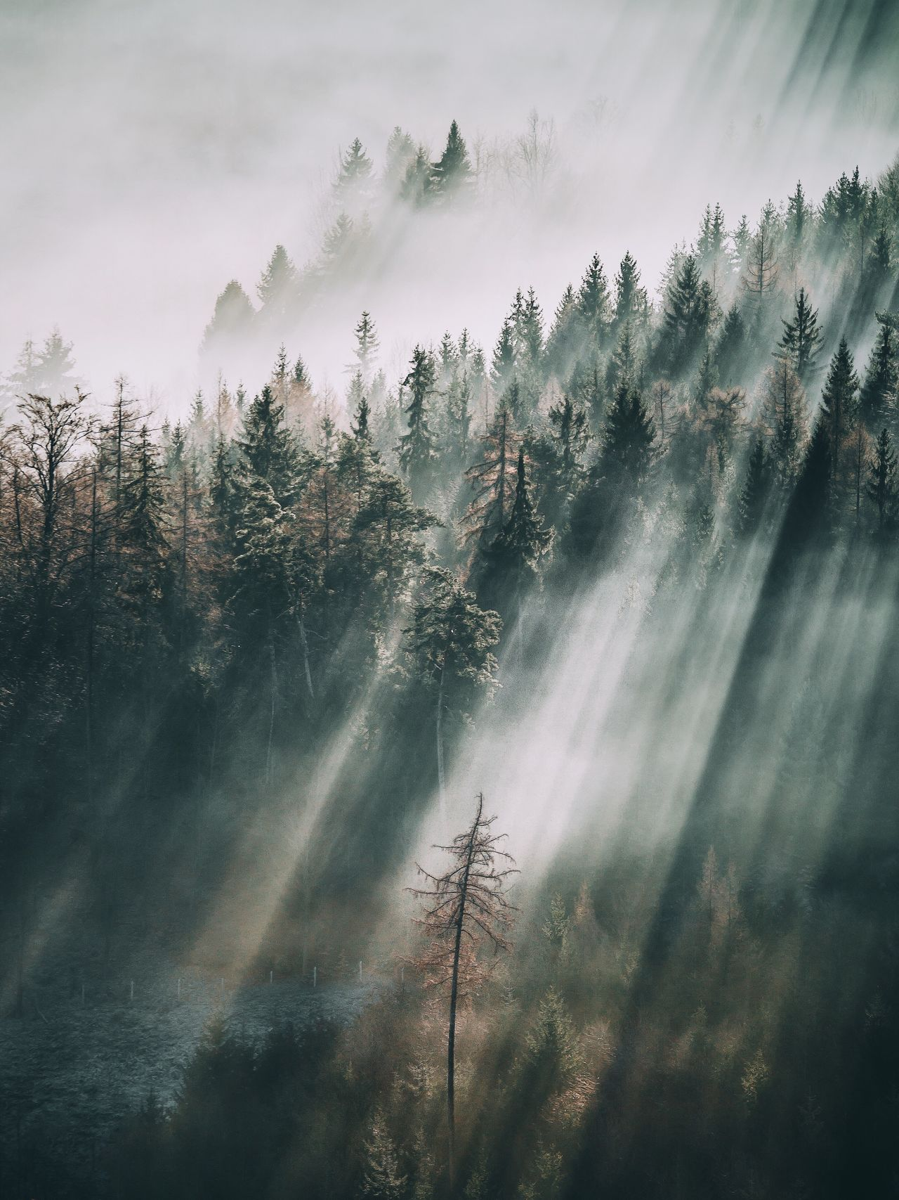 Tree Nature Tranquility Beauty In Nature Growth Scenics No People Tranquil Scene Outdoors Day Forest Fog Sky Landscape