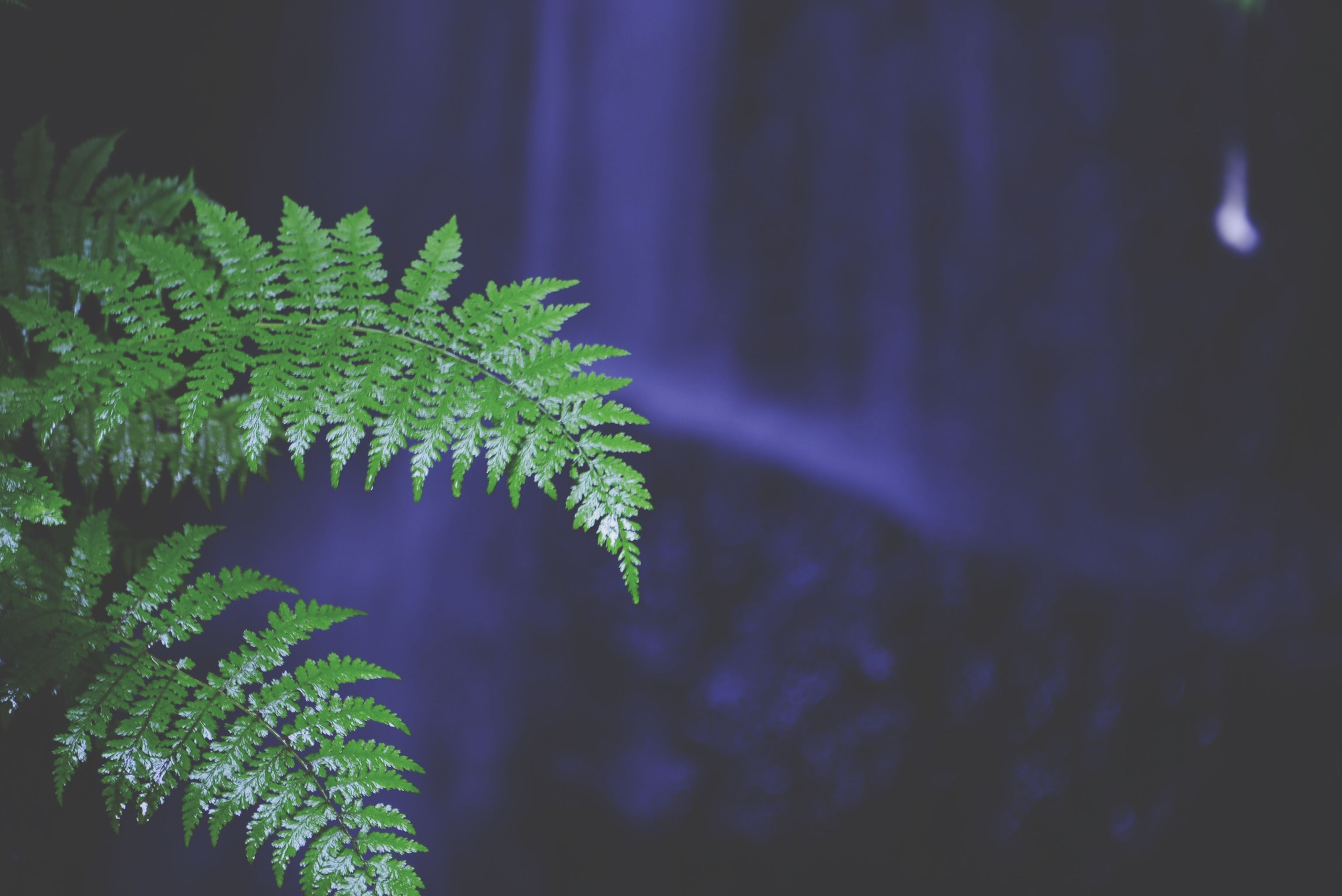 growth, night, nature, leaf, plant, green color, beauty in nature, tranquility, tree, outdoors, branch, no people, illuminated, tranquil scene, close-up, scenics, growing, low angle view, sky, focus on foreground