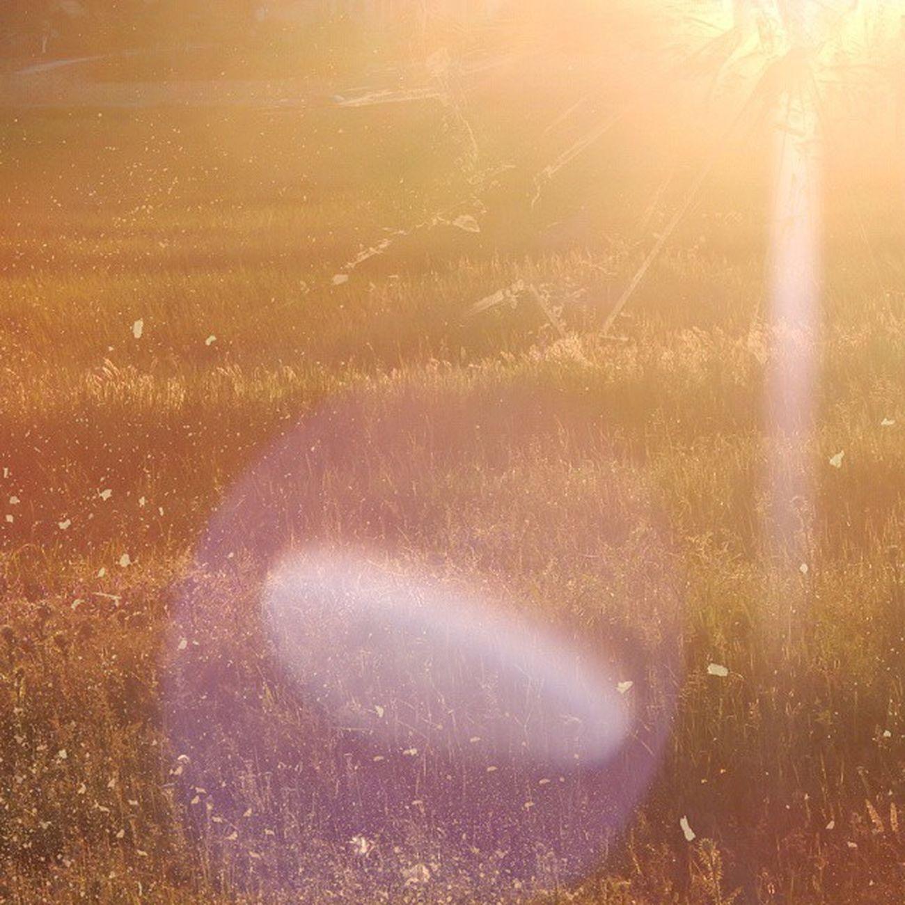 Красивый летний денёк Nikolaev Nikolaevgram Nature Beauty Природа Николаев