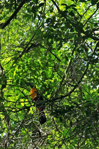 Tucano Photography Check This Out Bird Beautiful Nature Perfection Animals Tijuca's Forest Colors Nature