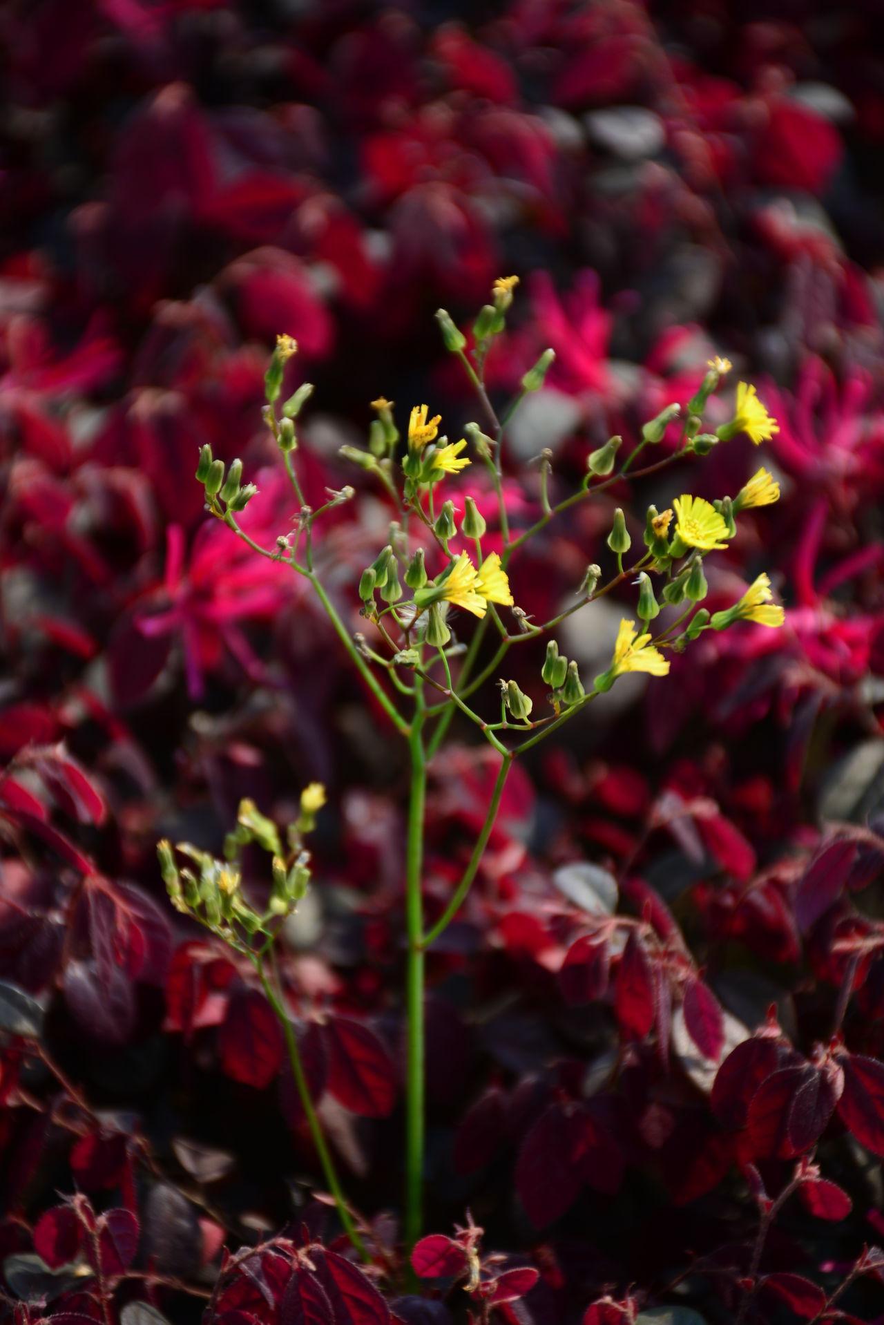 随记 Blackandwhite Flowers Red Spring Flowers 校园一角 校园风景 🍂🍃 椅子 椅子のある風景 爱 爱一朵花 爱情经过的地方 爱摄影 爱生活 石 石头 石头记 紫色 花