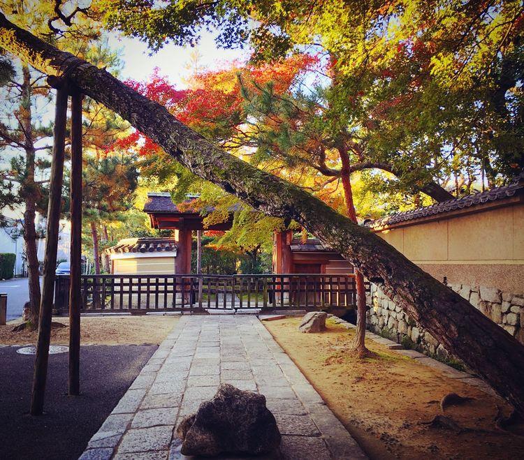 龍光院 大徳寺塔頭 大徳寺 京都 Kyoto Travel Destinations Autumn Colors Autumn Kyoto Autumn Beauty In Nature Kyoto, Japan Enjoying Life Relaxing Hello World 紅葉