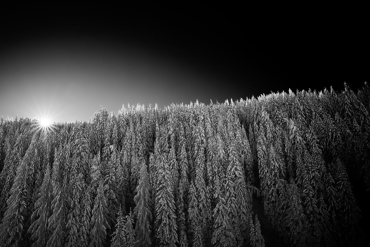 Low Angle View Of Snow On Trees Against Sky During Sunset