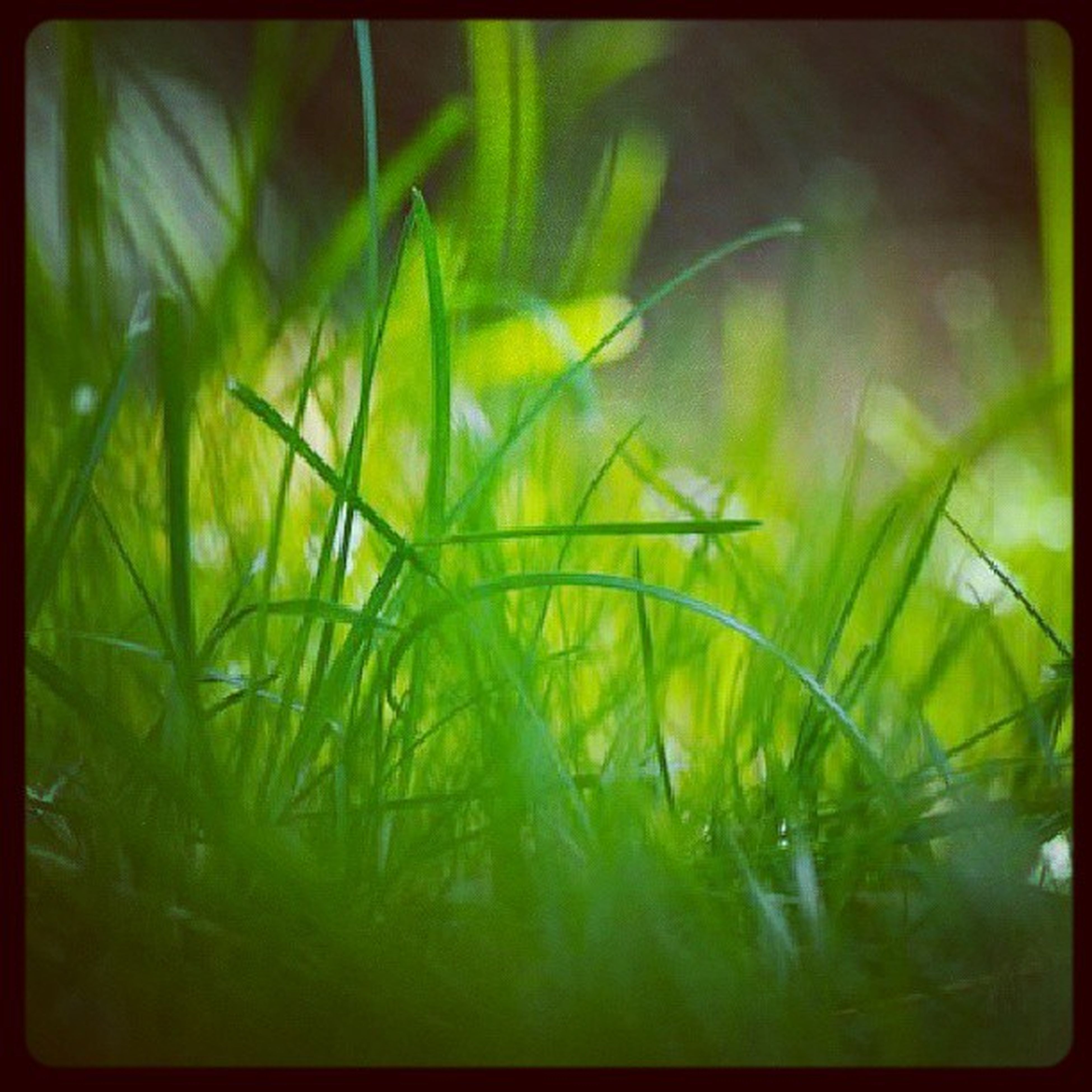 transfer print, auto post production filter, growth, plant, green color, nature, close-up, beauty in nature, water, leaf, freshness, tranquility, outdoors, no people, day, grass, green, selective focus, growing, field