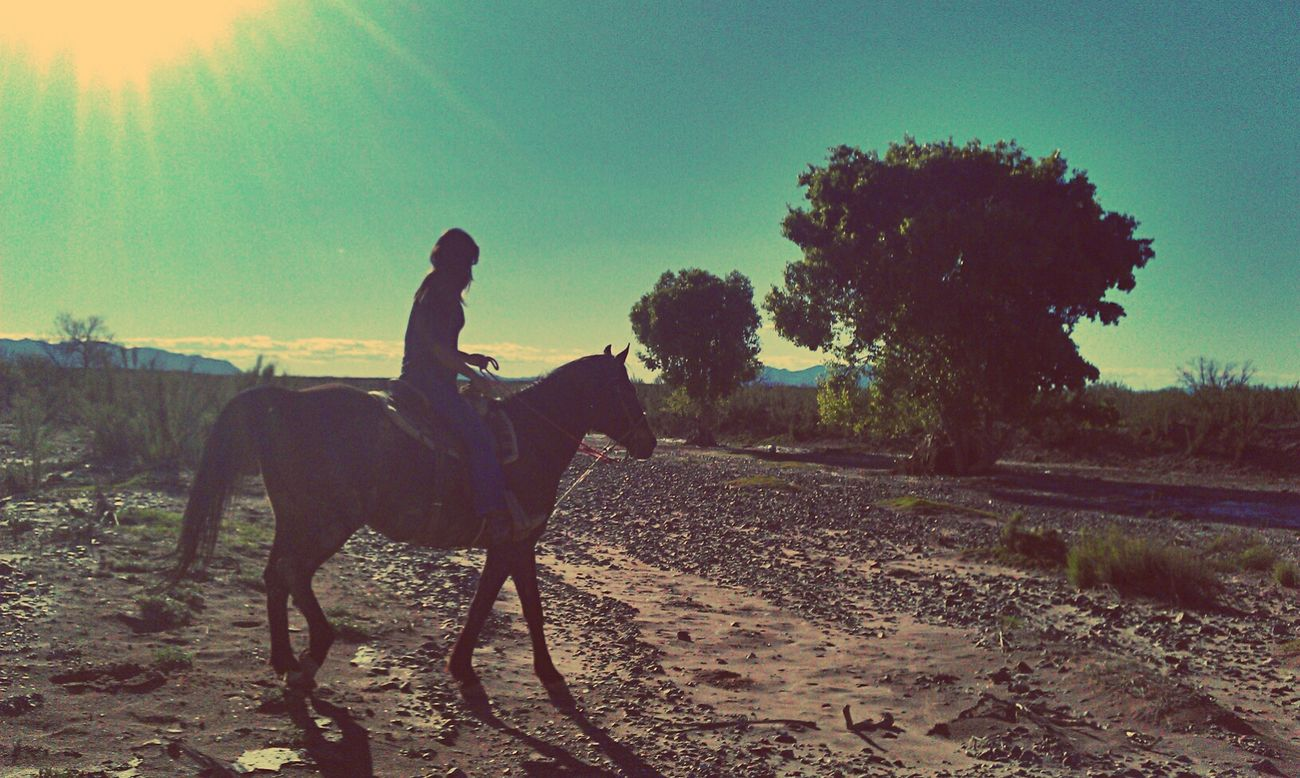 Horse Riding Enjoying Life Horseslife I Love Horses
