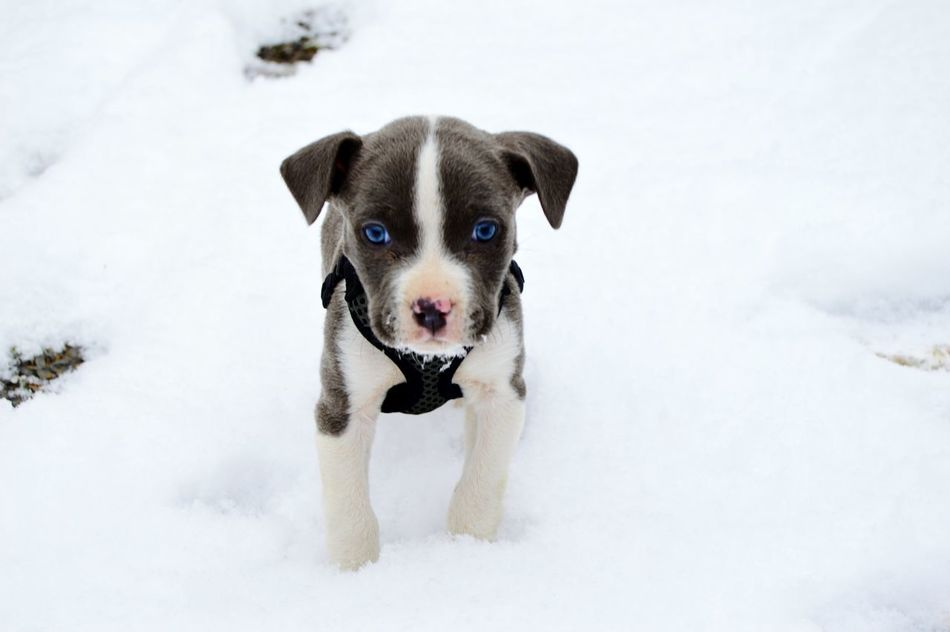Beautiful stock photos of puppy, Animal Themes, Beauty In Nature, Cold Temperature, Covered