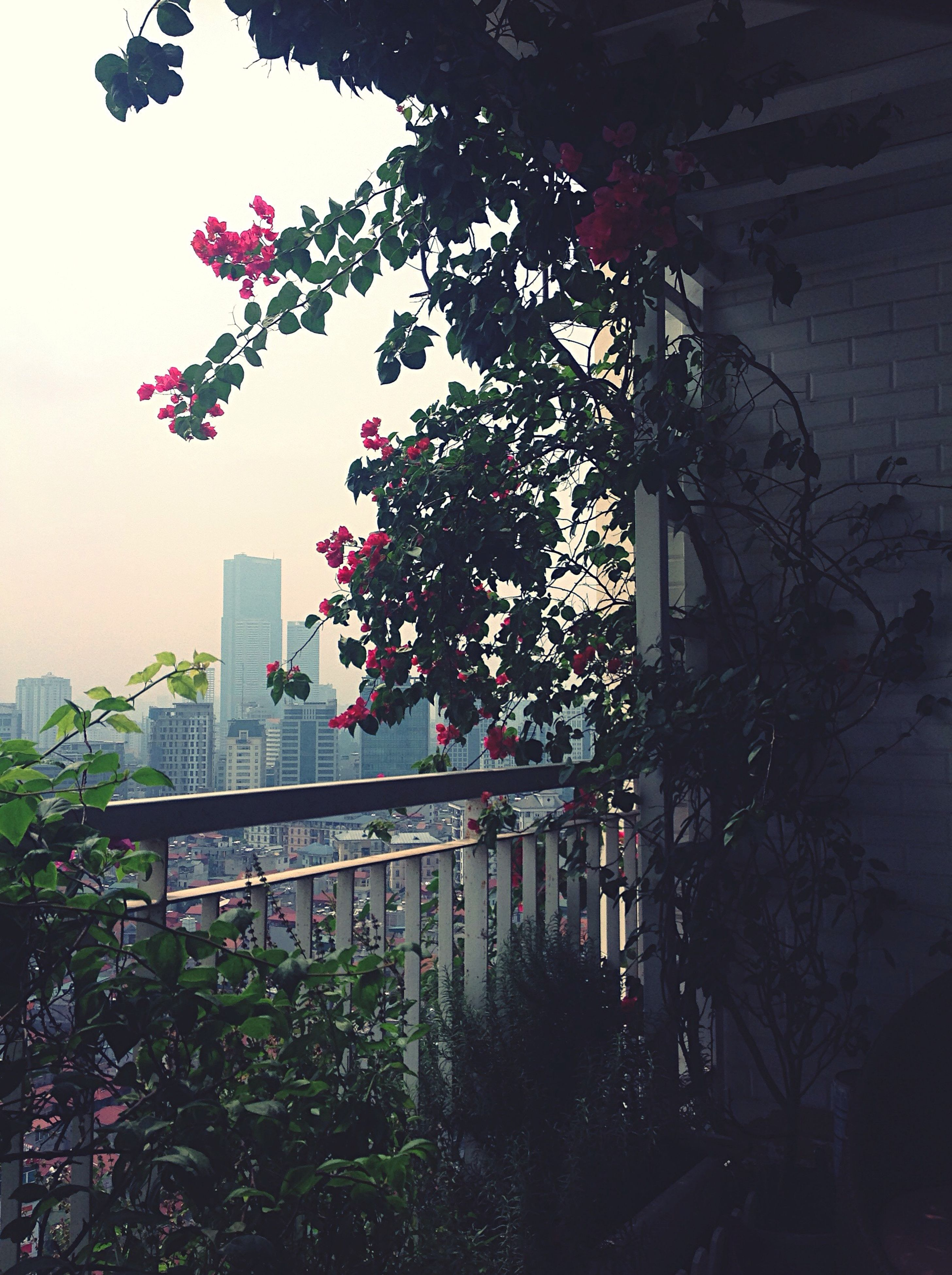 tree, growth, built structure, architecture, plant, building exterior, branch, flower, city, water, growing, sky, freshness, nature, skyscraper, day, springtime, fragility, no people, in bloom, tranquility, pink color